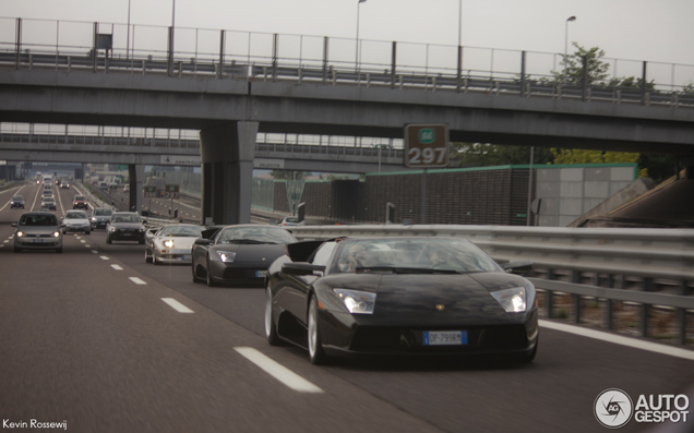 Wild bulls spotted together at the Italian highway!